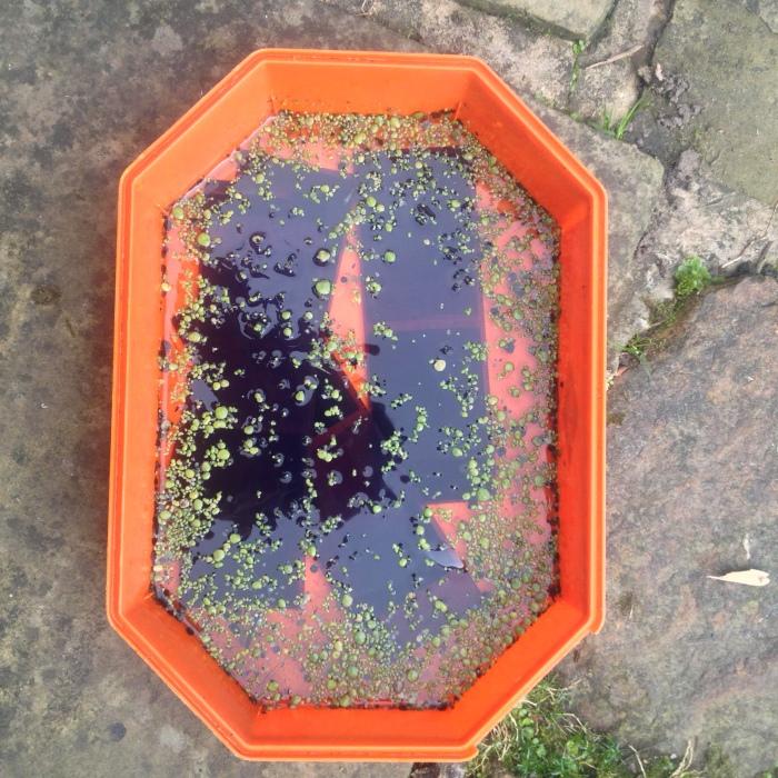 water bath image[1]